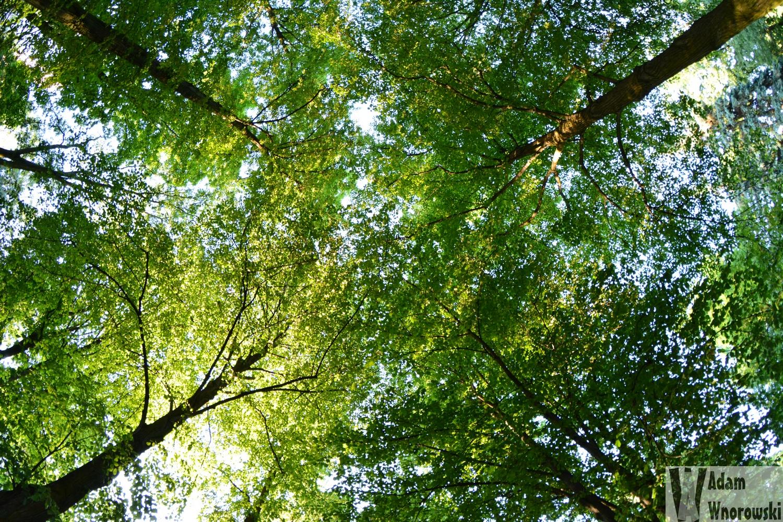 Planty - drzewa